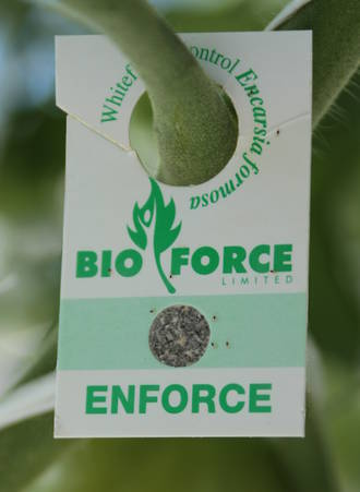 Enforce™ for Whitefly Control