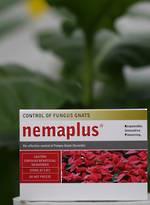 nemaplus® for Fungus Gnat & Thrips Control